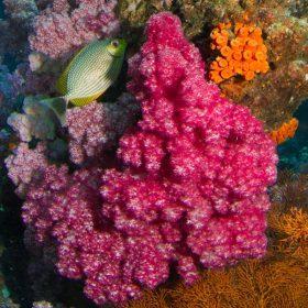 Nowy rok, nowy kolor Pantone - koral.